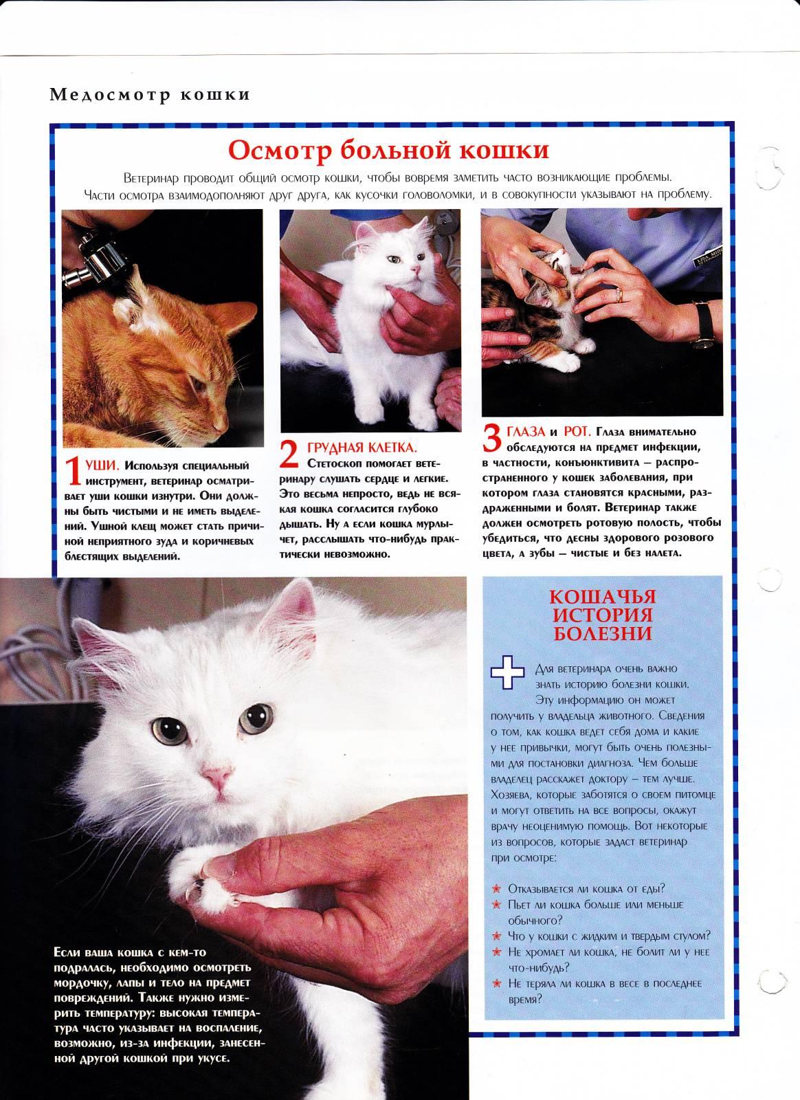 какой день работы ветеринарный дл¤ кошек